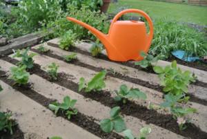 garden 934189 1920