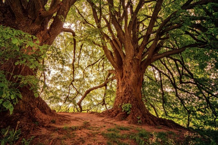 bark branch brown 1125778